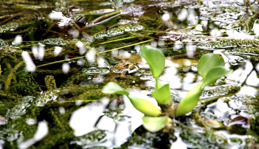 ökologische Aufwertung für Naturflächen.
